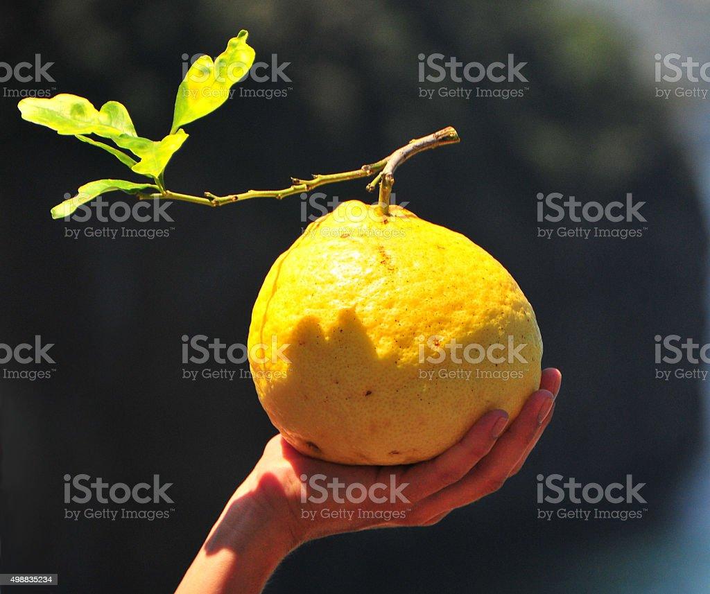 Big limão em uma mão foto royalty-free