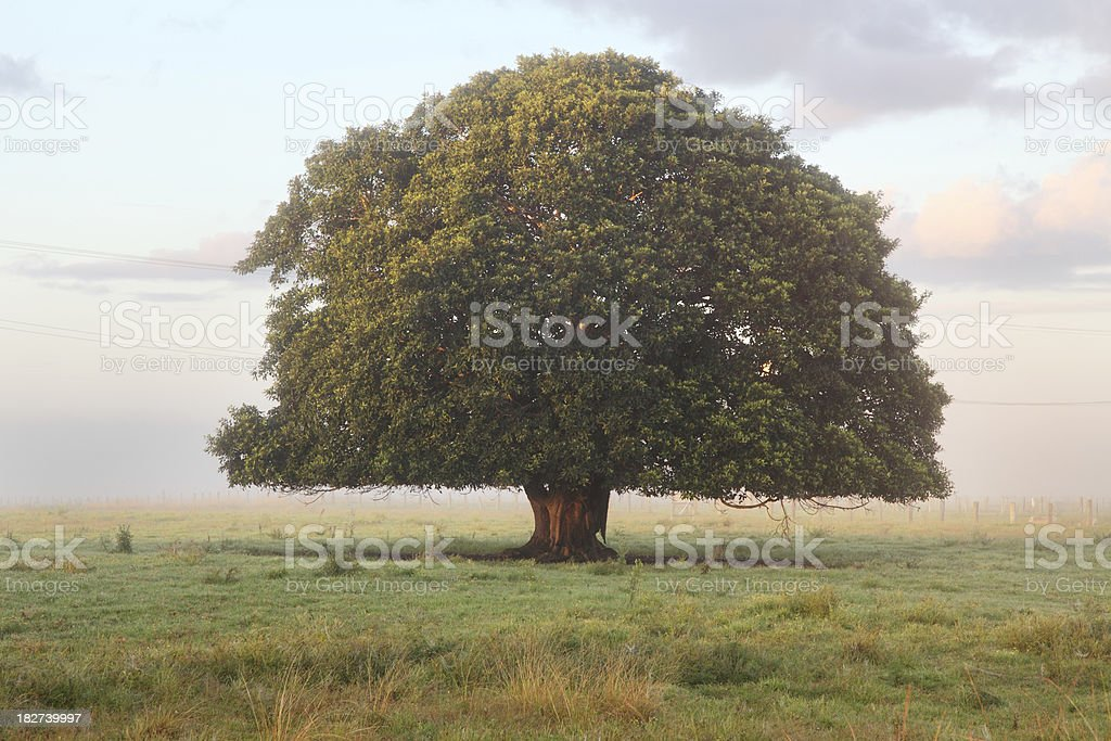 Big Lonely Tree stock photo