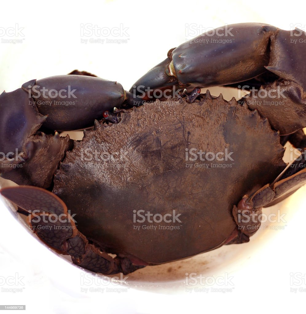 Big Mudcrab stock photo