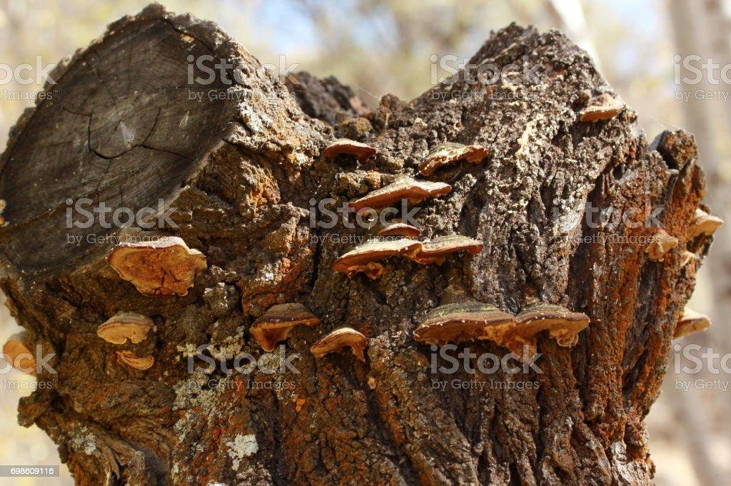 Big mushroom on tree stock photo