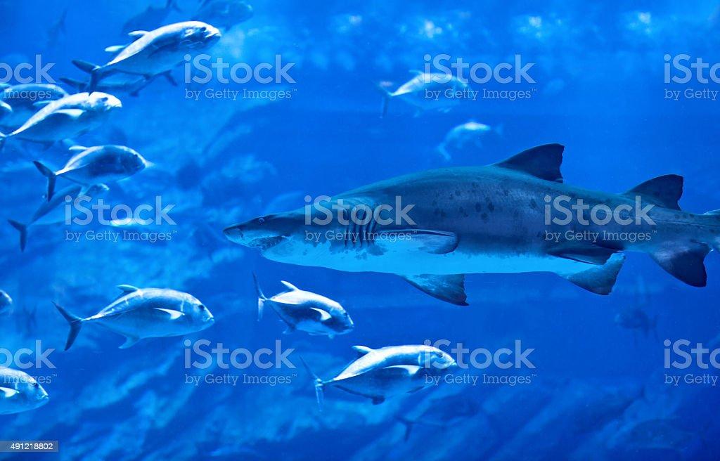 Big natural aquarium stock photo
