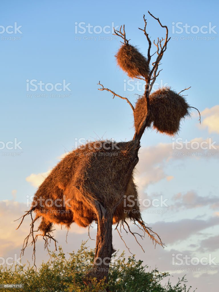 Big nest, Namibia, Africa stock photo