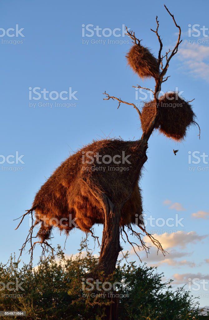 Big nest, Namibia stock photo