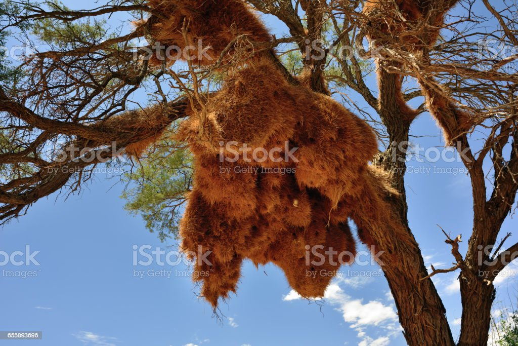 Big nest. Namibia stock photo