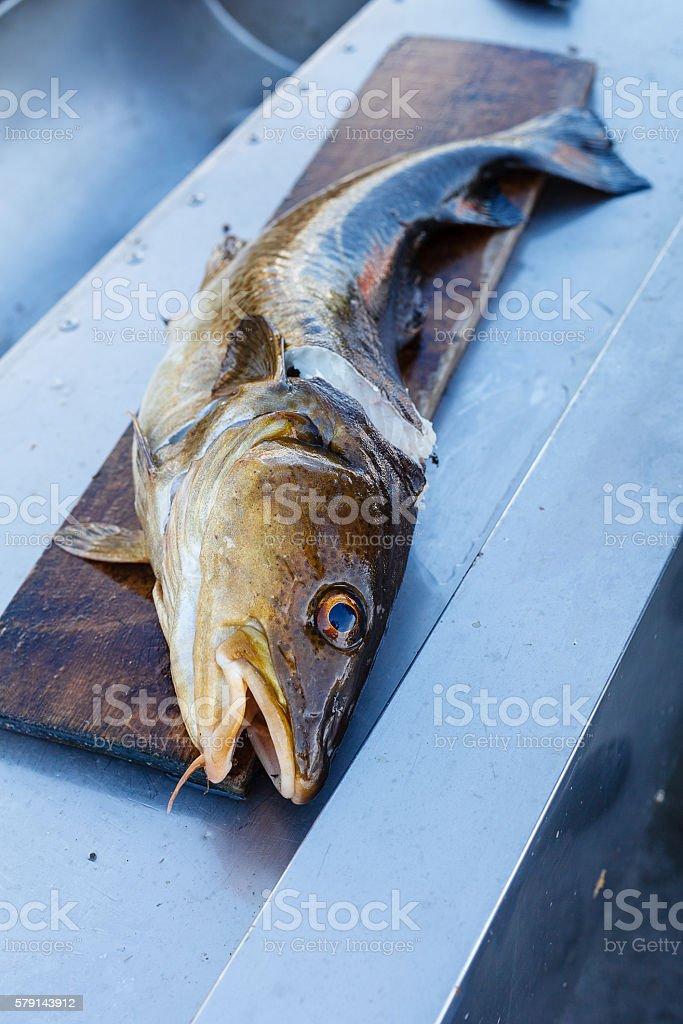 Big nowegian fish on cutting board stock photo