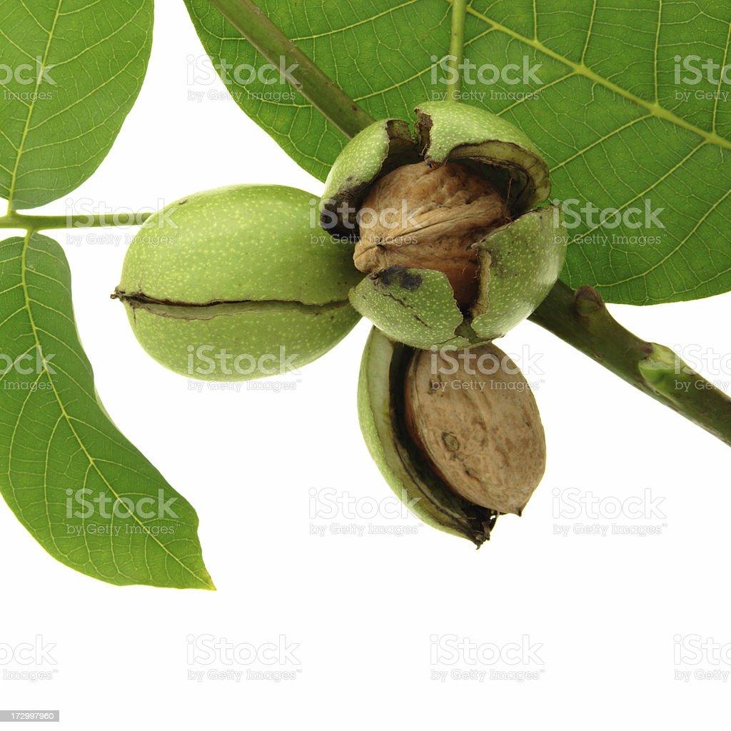 Big Nuts royalty-free stock photo