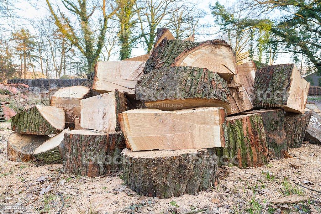 Big oak tree trunks in parts stock photo