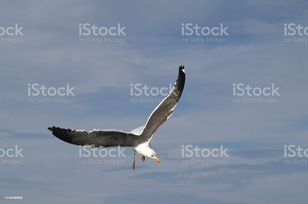 big ocean seagull in the sky royalty-free stock photo