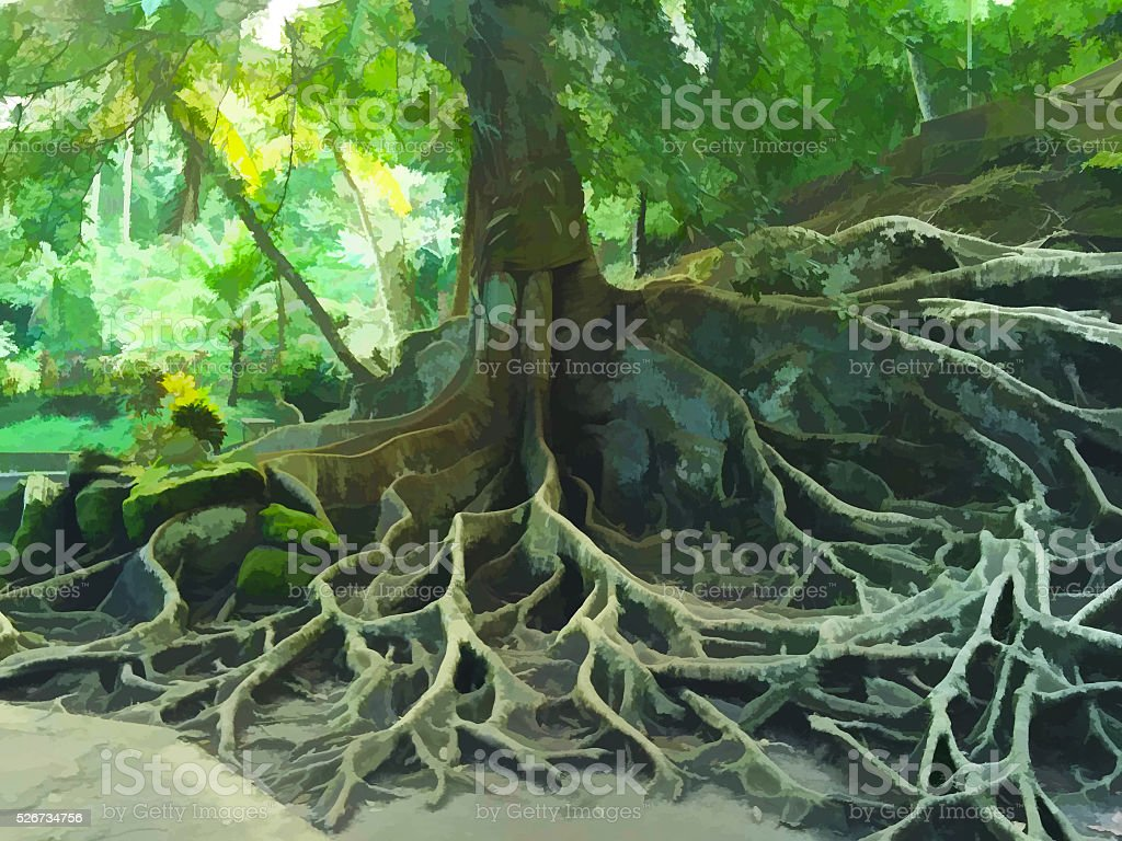 Big old tree in a tropical forest stock photo