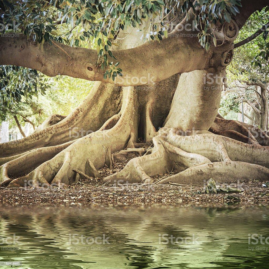 Big old tree stock photo