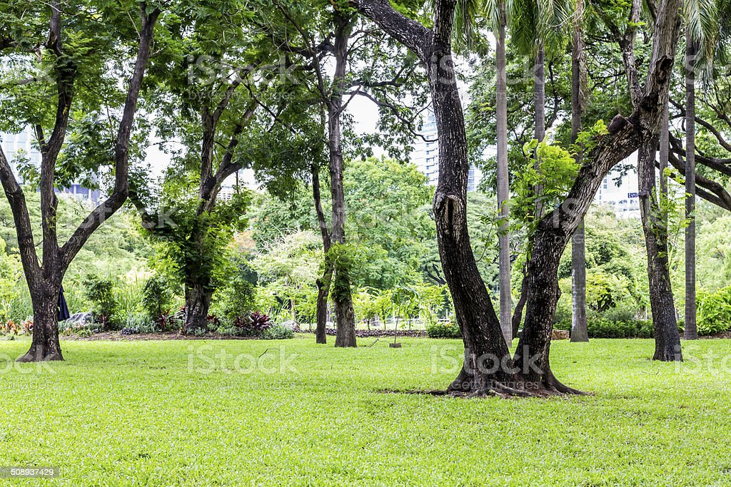 Big old tree surrounded with grasses and small trees stock photo
