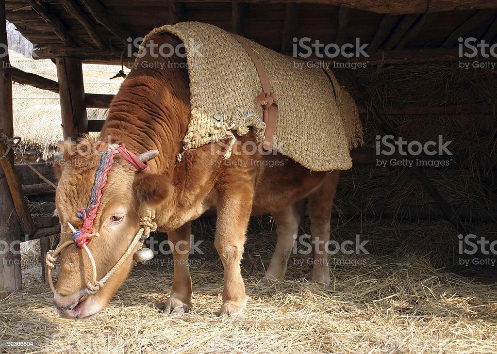 Big ox royalty-free stock photo