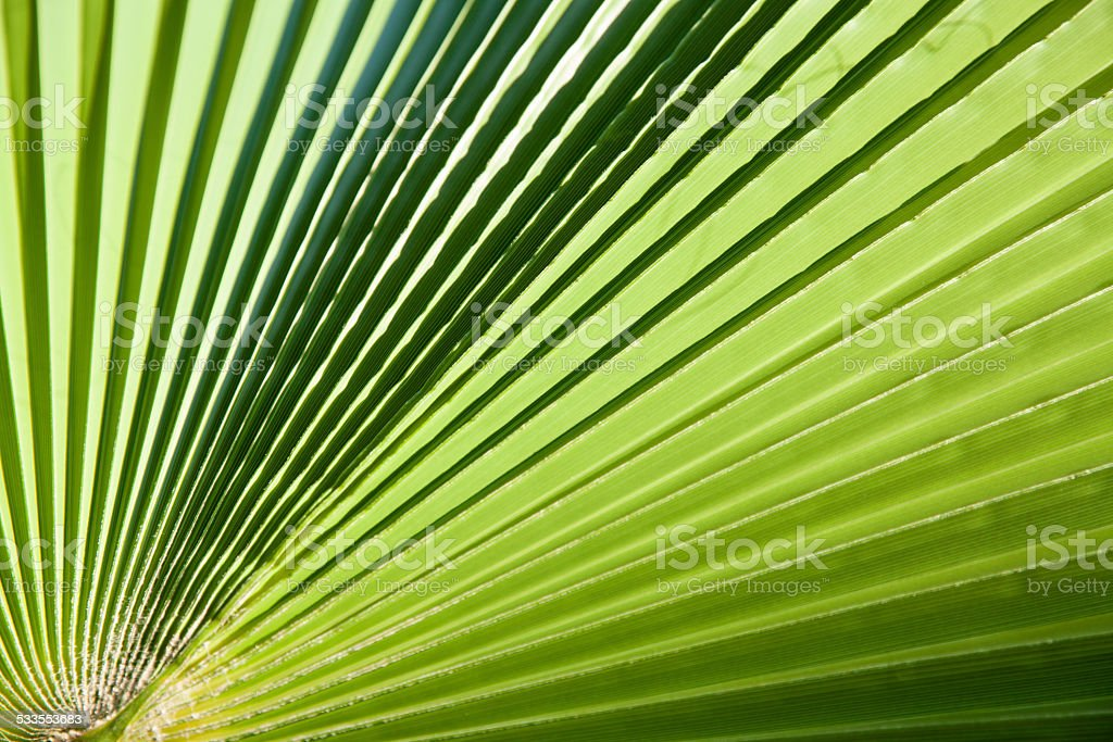 Big palm leaf stock photo