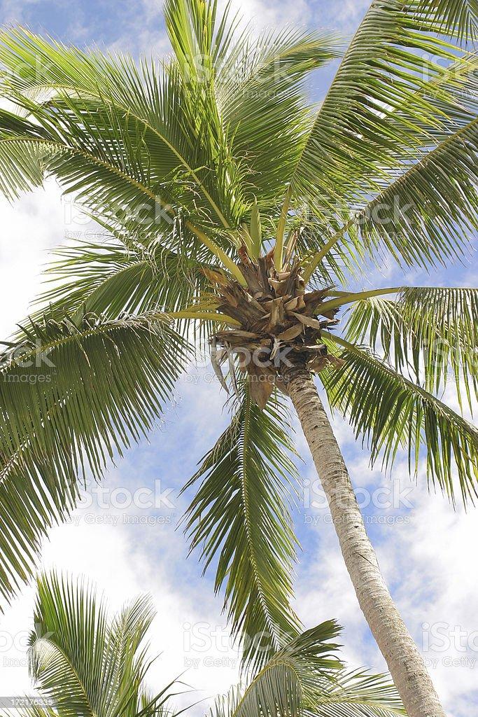 Big Palm royalty-free stock photo