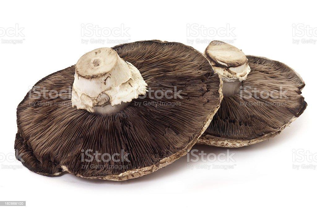 Big Portobello Mushroom Caps royalty-free stock photo