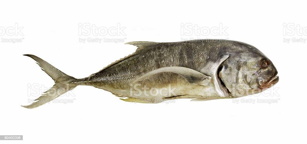 Big raw fish isolated stock photo