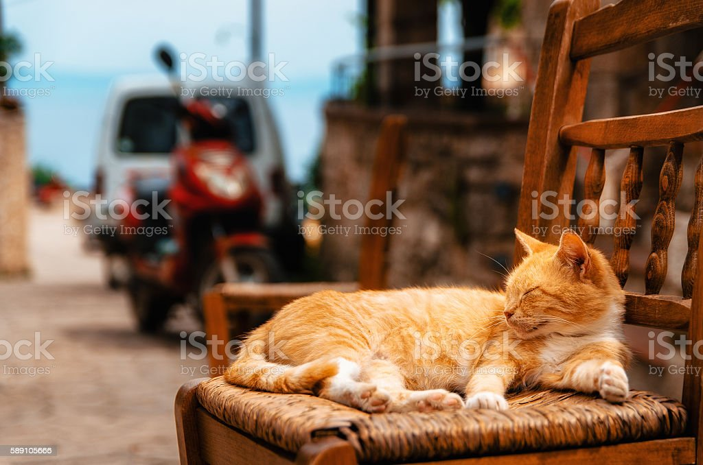 Big red ginger cat reposes outdoors on a chair стоковое фото
