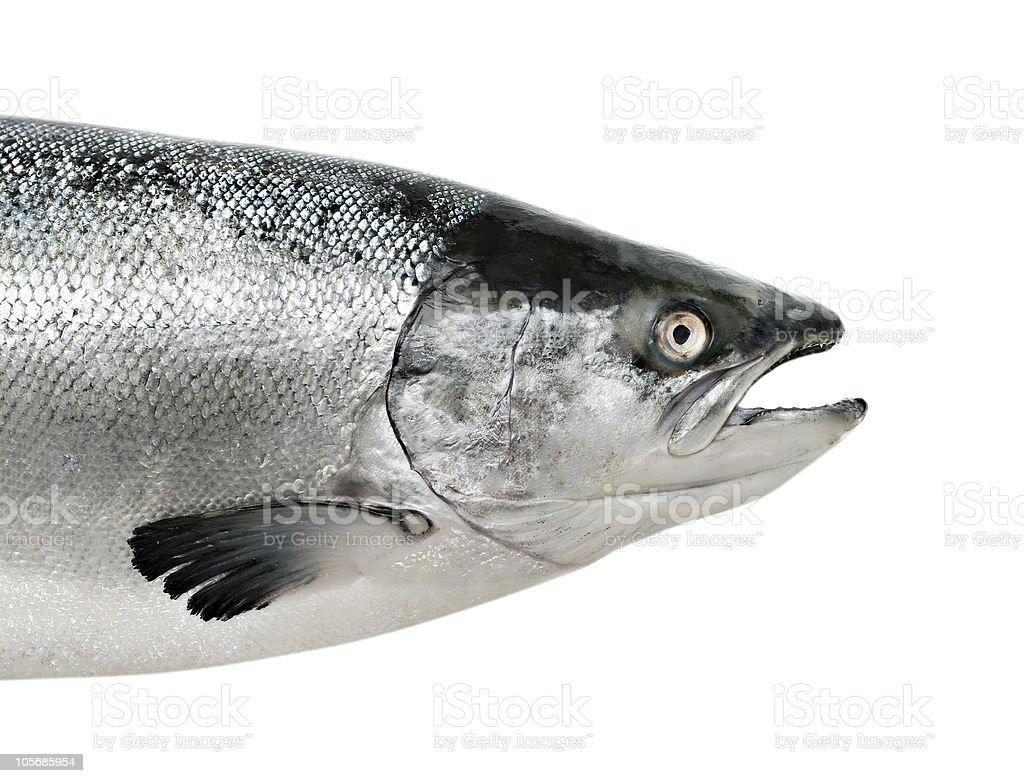 Big salmon fish isolated royalty-free stock photo