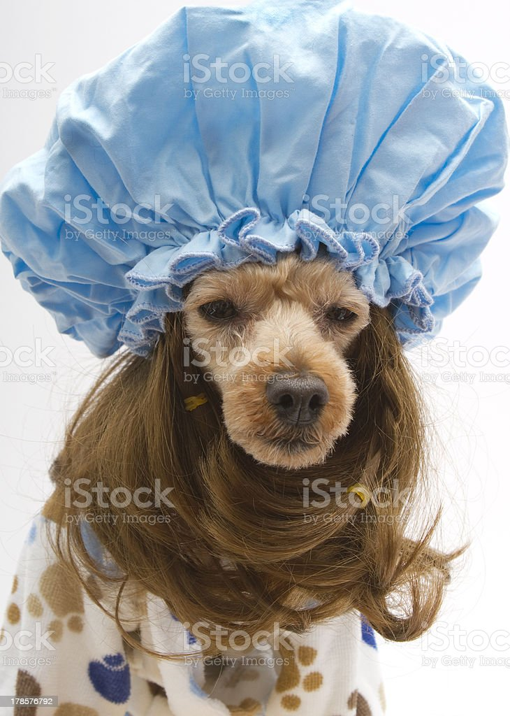 Big Shower Cap royalty-free stock photo
