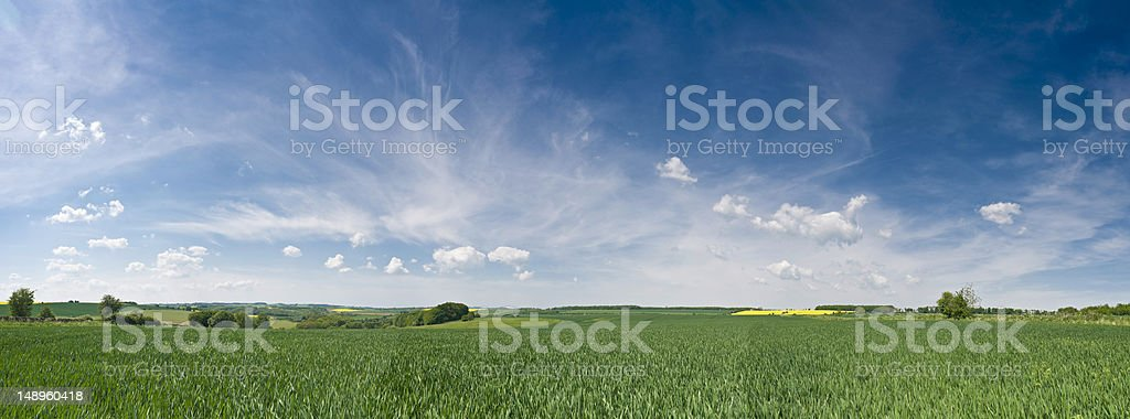 Big skies over lush green crop stock photo