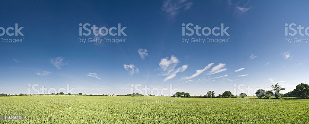Big sky green crop background royalty-free stock photo