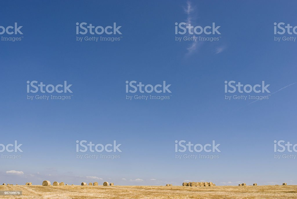 Big sky over golden field royalty-free stock photo