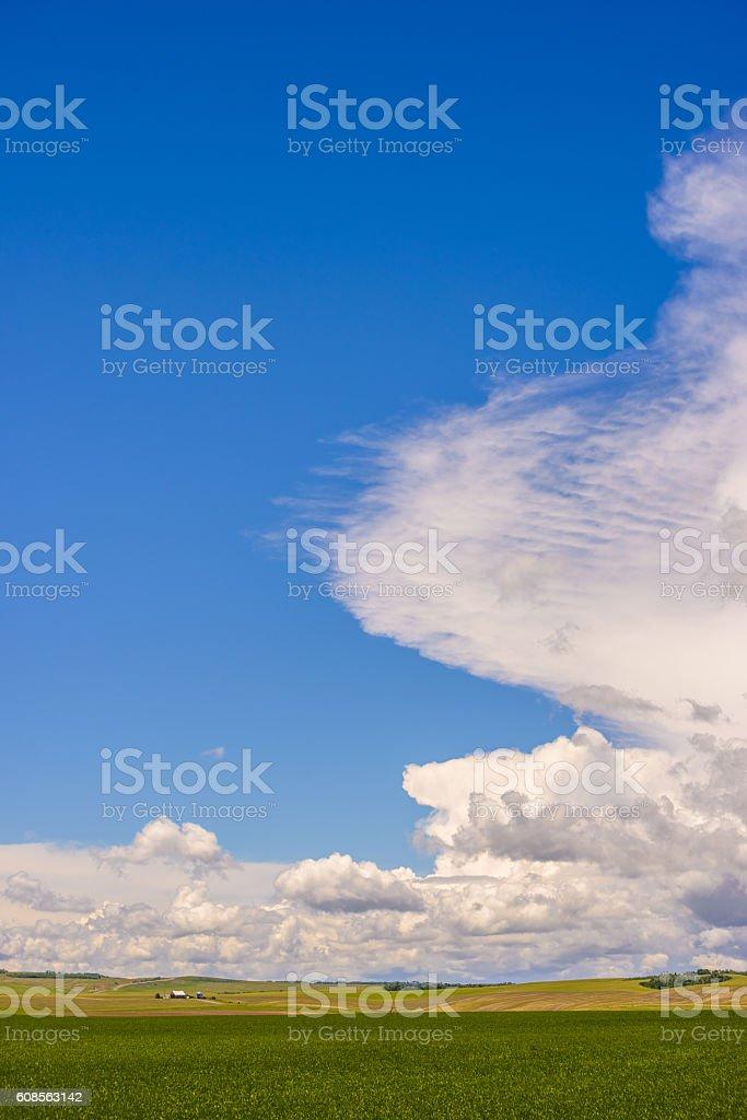 Big sky over green field stock photo