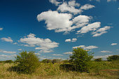 Big sky over scrubland