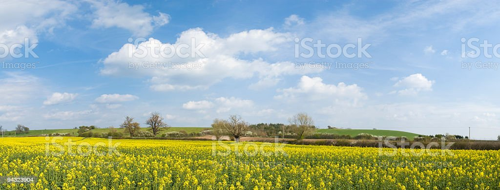 Big sky over yellow field royalty-free stock photo