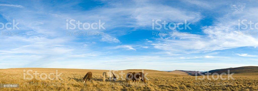 Big sky, wild horses royalty-free stock photo