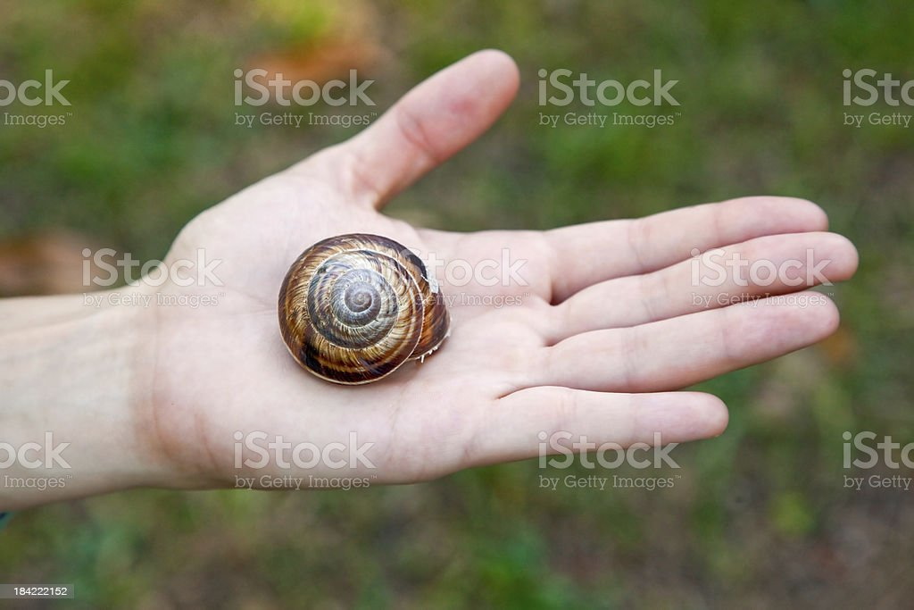 big snail on the human hand royalty-free stock photo