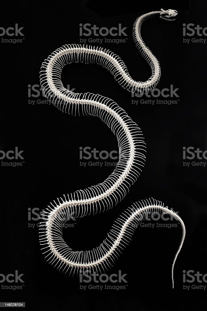 big snake stock photo
