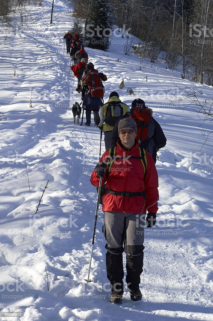 Big snowshoer group climbing in winter birch forest royalty-free stock photo