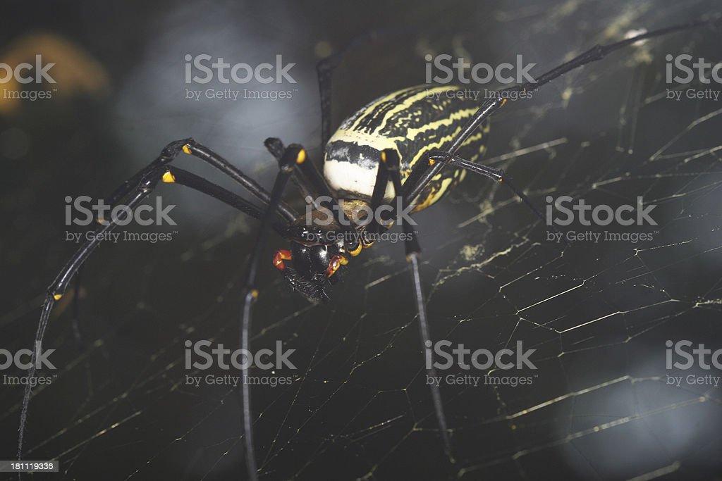 Big Spider royalty-free stock photo
