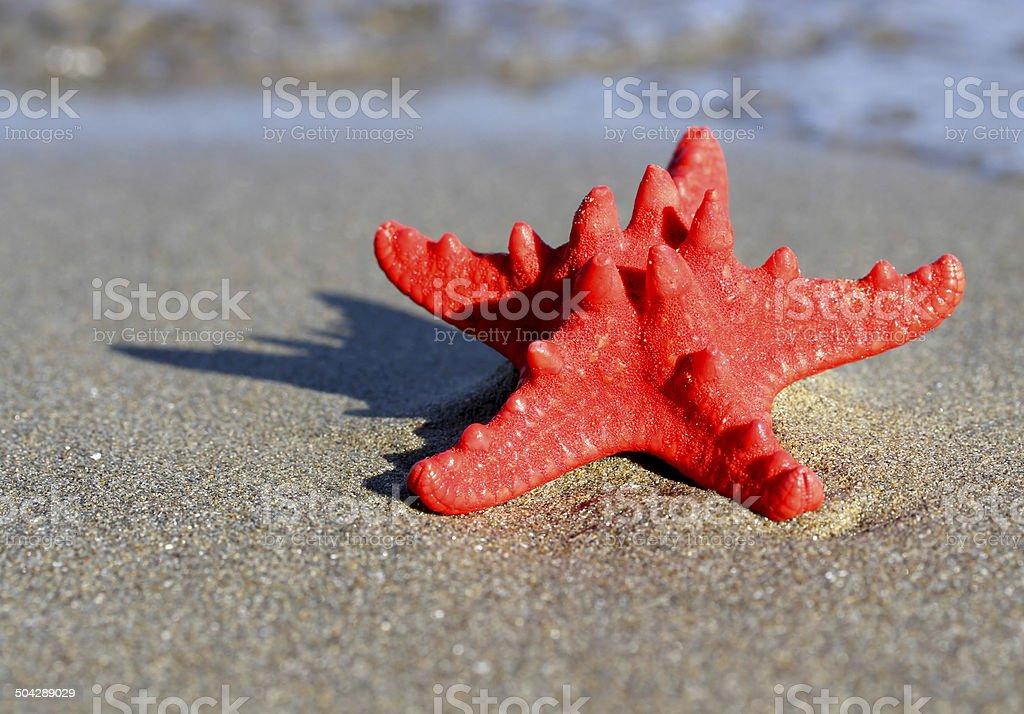 big starfish lying on tropical sea Beach stock photo