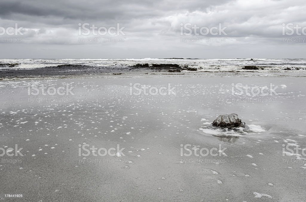 Big stranded dead Jellyfish on beach royalty-free stock photo