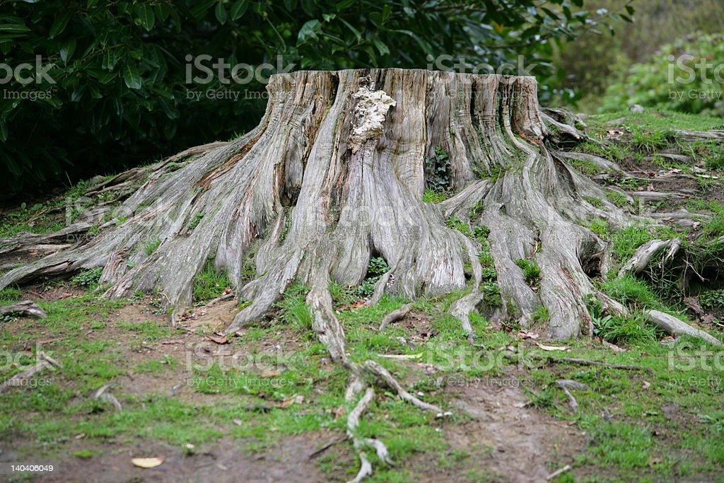 Big stump stock photo
