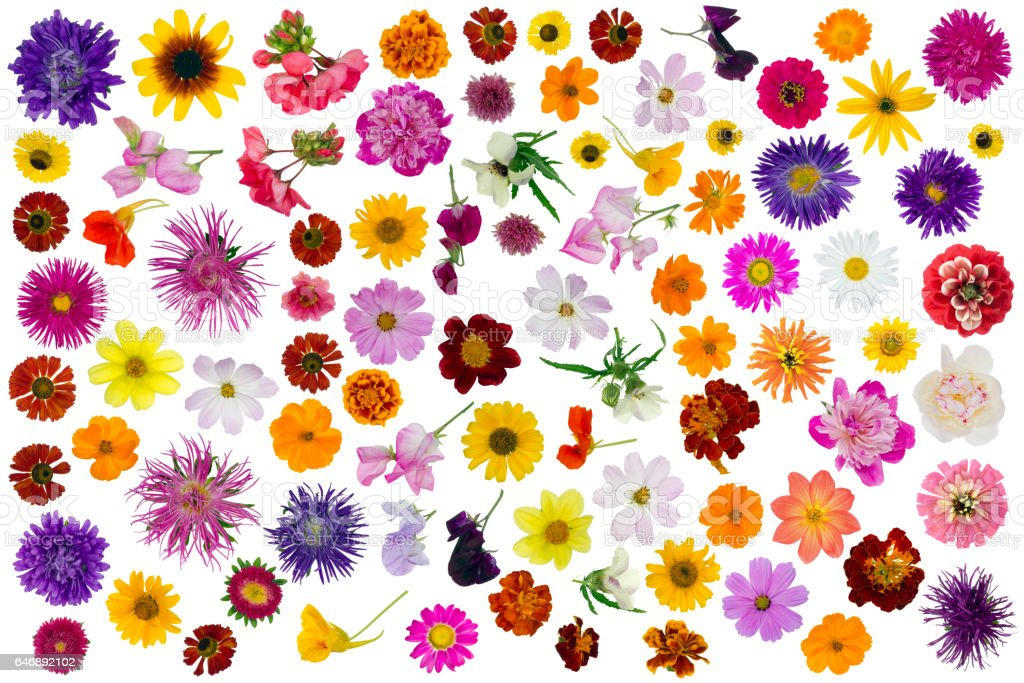Big summer and autumn flowers set isolated collage stock photo