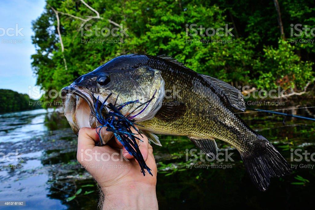 Big summer bass stock photo
