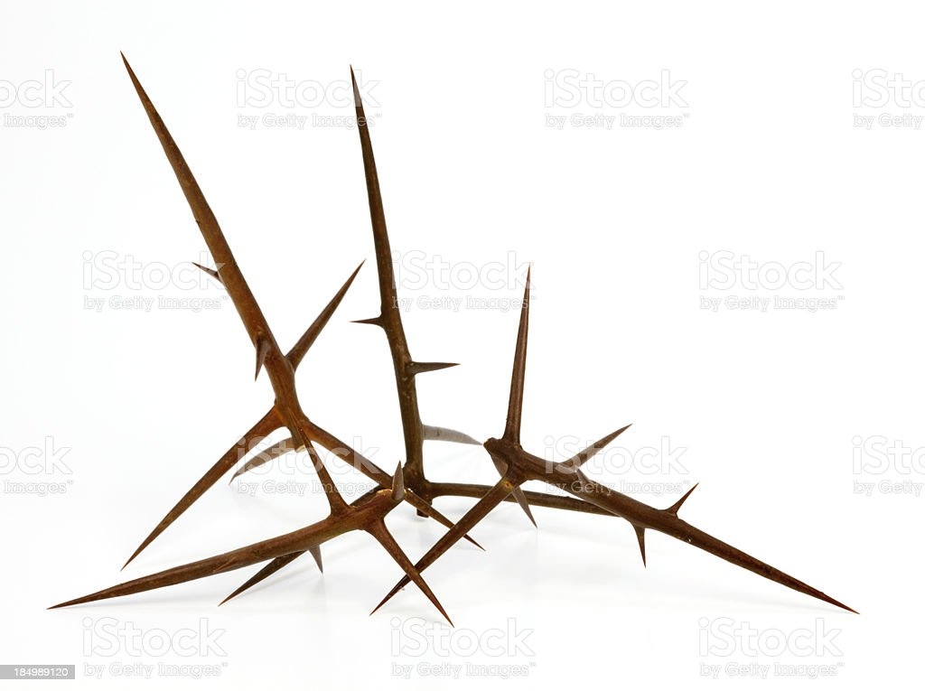 Big thorns stock photo