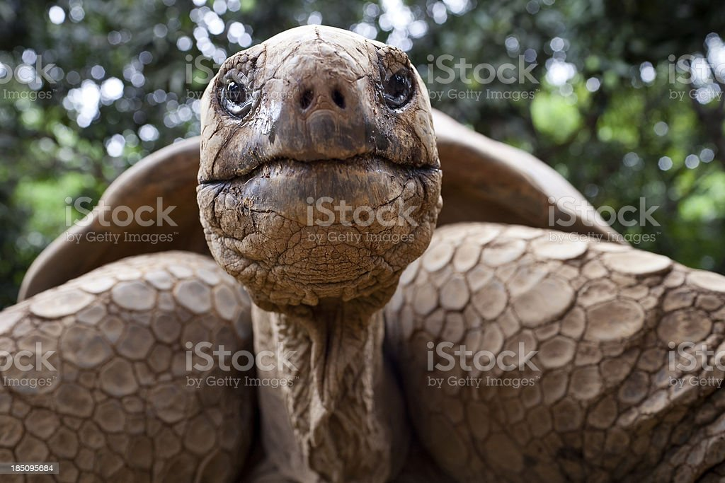 Big tortoise stock photo
