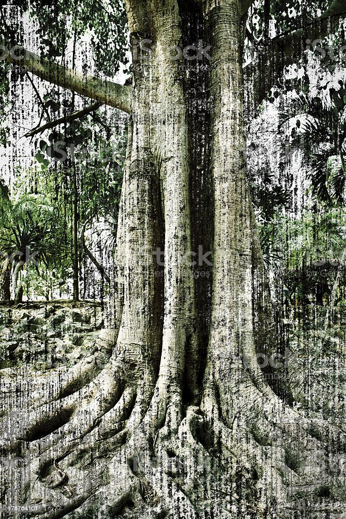 big tree and root royalty-free stock photo