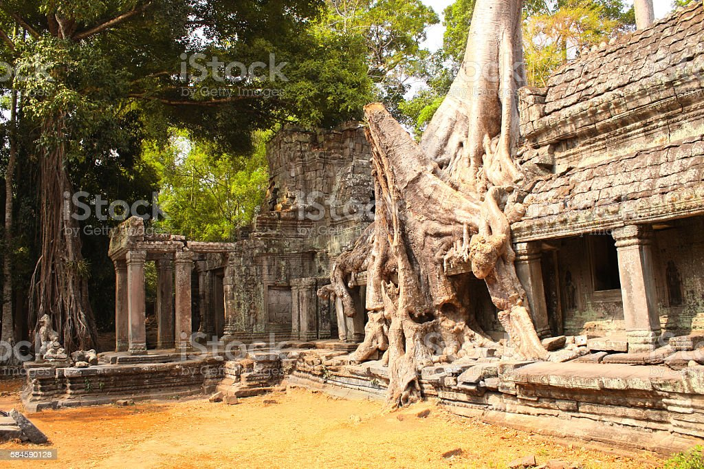Big tree and ruins of temple in Angkor Wat complex stock photo
