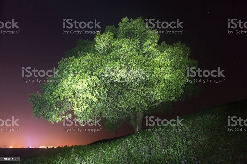 big tree at night with light paint on stock photo
