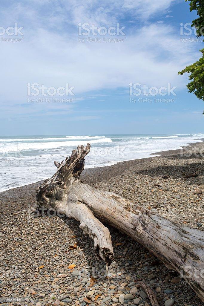Big Tree Driftwood along a Costa Rica Beach stock photo