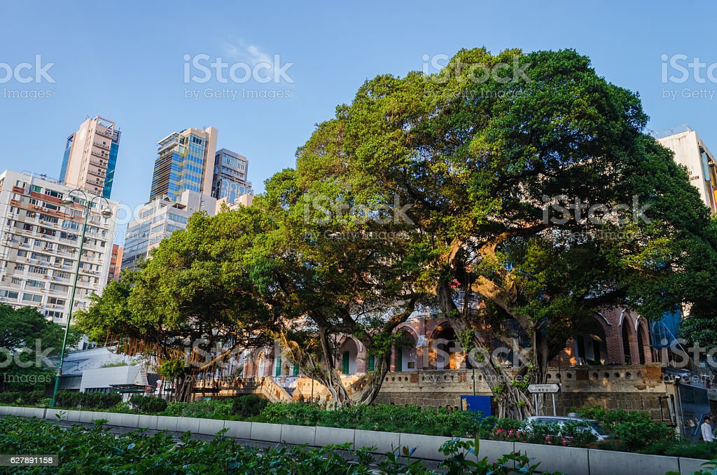Big tree in big city stock photo