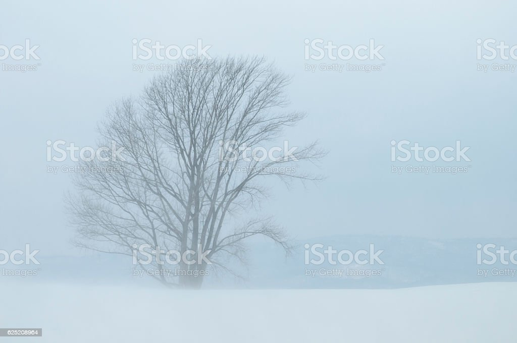 Big tree in the snowstorm stock photo