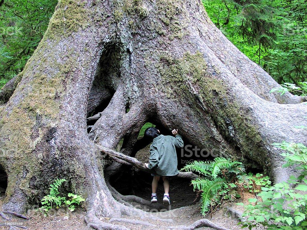 Big tree royalty-free stock photo