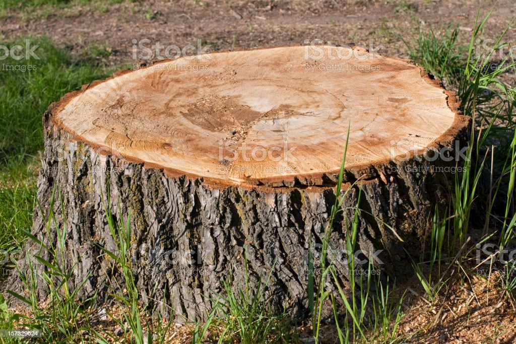 Big tree Stump stock photo