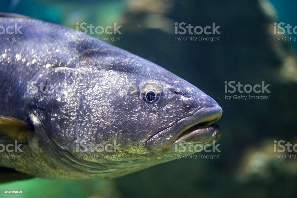 Big tropical fish stock photo